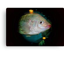 white fish Canvas Print