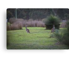 Kangaroos at Dusk Canvas Print