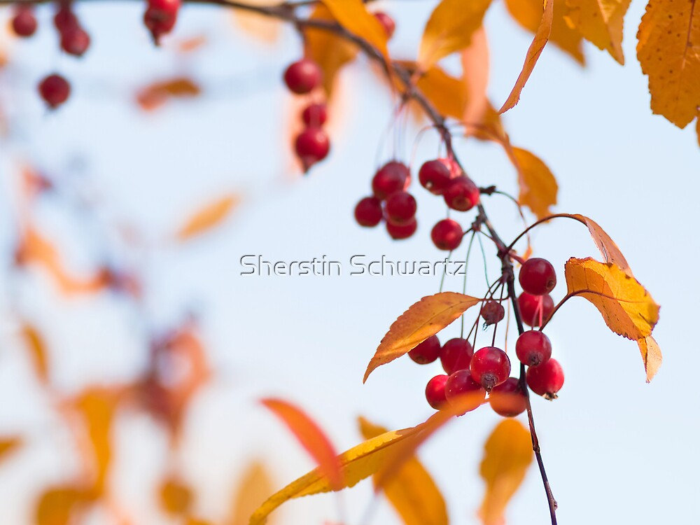 Fresh. by Sherstin Schwartz