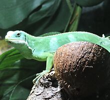 Lime & Coconut (Fiji Banded Iguana) by CreativeEm