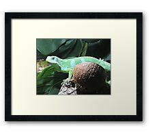 Lime & Coconut (Fiji Banded Iguana) Framed Print
