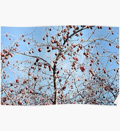 Winter Apple Tree Poster