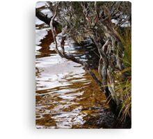 nature art #11, Dove Lake Canvas Print