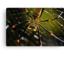 Spidey! Canvas Print