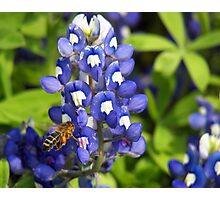 Spring Bee Photographic Print