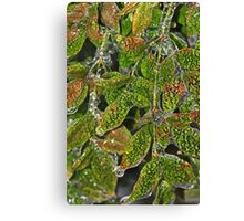 Alligator Holly Canvas Print