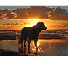 My Golden Retriever Ditte on the beach at sunset Photographic Print