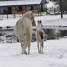 Winter Day by tayja