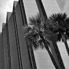 Palms and Concrete  by John  Kapusta