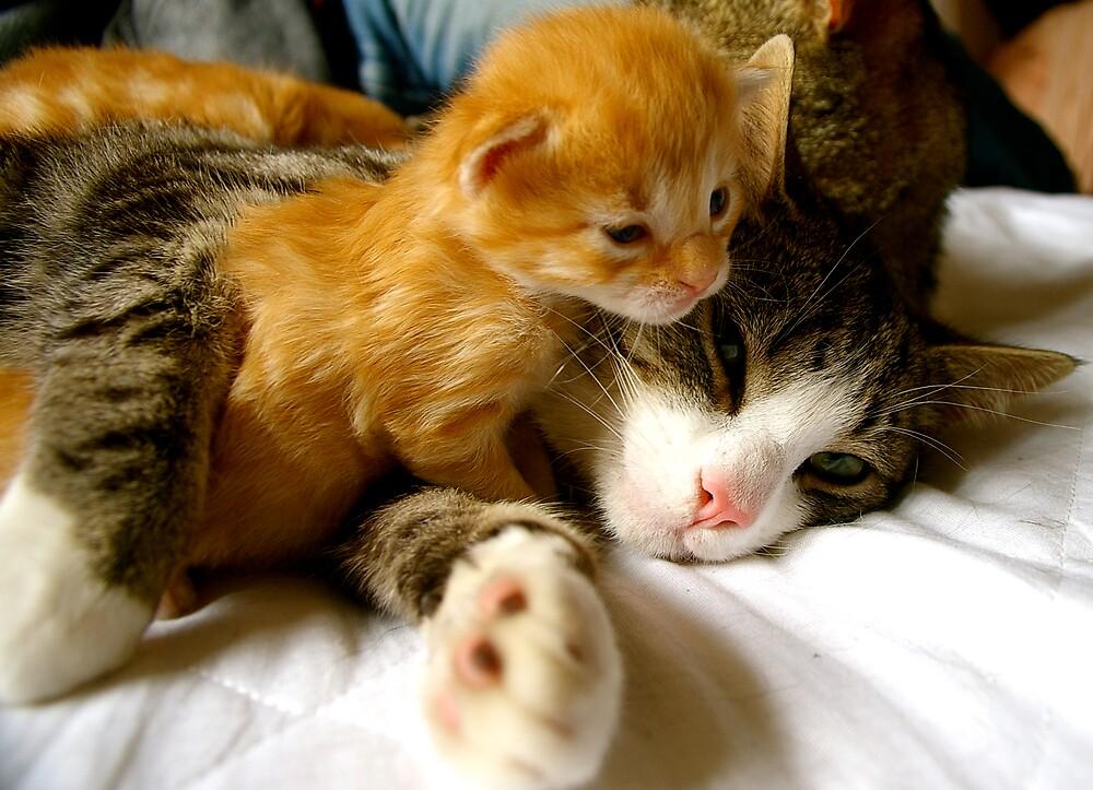 Cuddles by Kimberley Barton