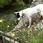 Gemma looking in river by Ainslie Keele
