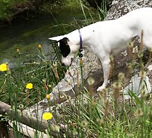 Gemma looking in river by Ainslie Fraser