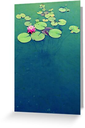 Lily Pond Blues by Kristina Gale