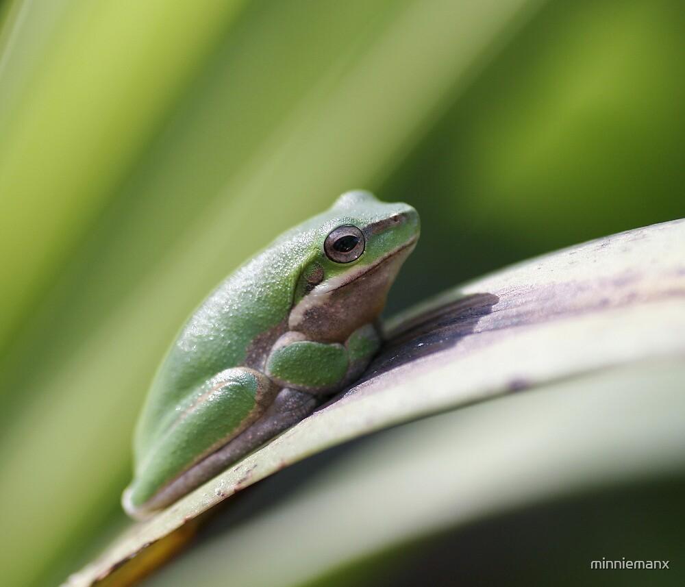 Little Kermit. by minniemanx
