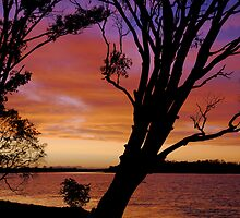 hastings river sunset  by wildplaces
