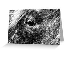 Equine Greeting Card