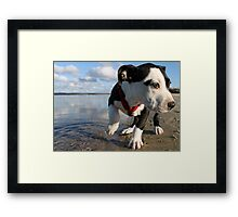 Louie at the bay Framed Print