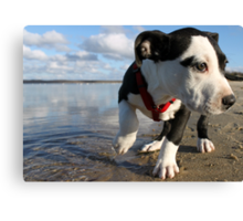 Louie at the bay Canvas Print