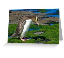 Yellow-eyed Penguin Greeting Card