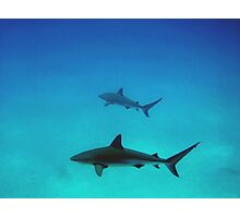 Caribbean reef sharks Photographic Print