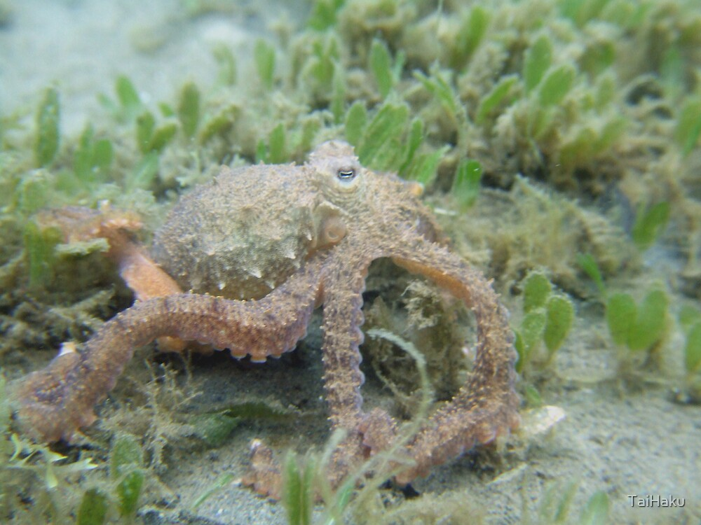 Octopus by TaiHaku