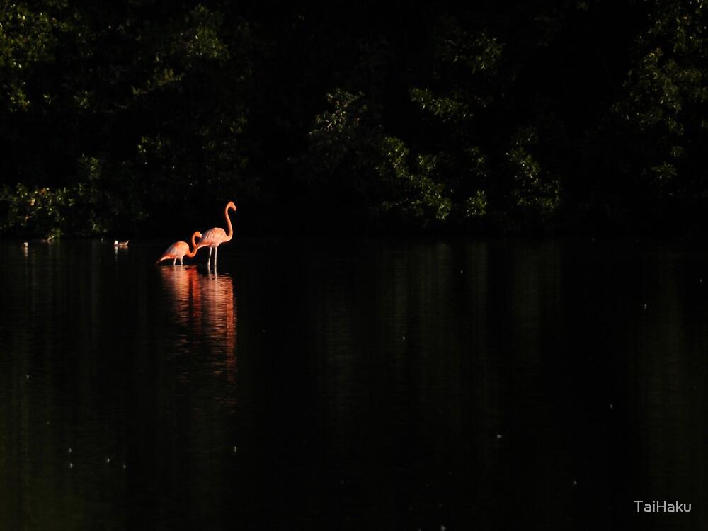 Flamingos by TaiHaku
