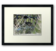 Easter chicks Framed Print