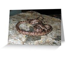 Virgin Islands Boa Greeting Card