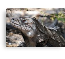 Ricord's Iguana Canvas Print