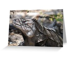 Ricord's Iguana Greeting Card