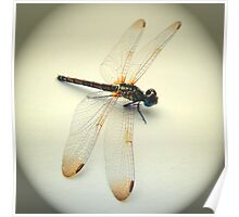 Portrait of a Dragonfly Poster