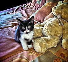 Teddy Cat In Bed by terrebo