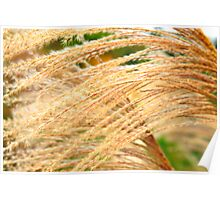 Wild Grass in Abstract Poster