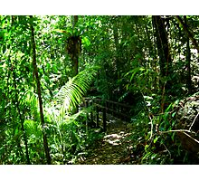 Rainforest Walk Photographic Print
