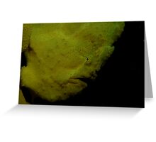 Commerson's Frogfish Greeting Card