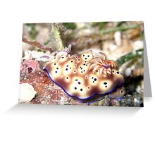 Nudibranch Greeting Card