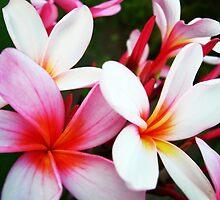Frangipani Heaven by JuliaWright