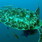 Green turtle shell by TaiHaku