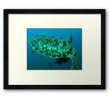 Green turtle shell Framed Print