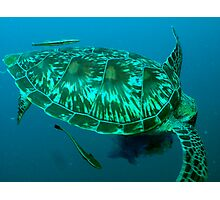 Green turtle shell Photographic Print