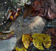 Leaves of North Carolina by Paintersblah74