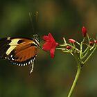 Butterflies by Adam Bykowski