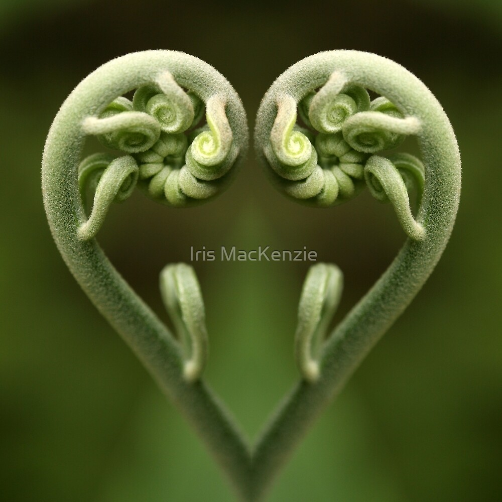 reflective heart by Iris MacKenzie