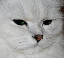 my kitty ruby by whatabigbang