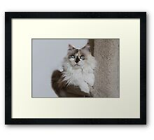 Mia, my girl! Framed Print