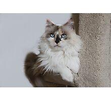Mia, my girl! Photographic Print