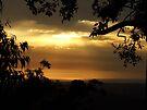 """""""Copper Dawn"""" by debsphotos"""