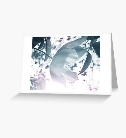 Glare Greeting Card