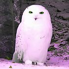 Snow Owl by madmac57