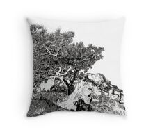 Torrey Pine Tree Picture by Rd Riccoboni Throw Pillow